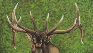 Cam Helgason Elk (1 of 1)